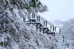 Passerelle d'observation des végétaux sous la neige